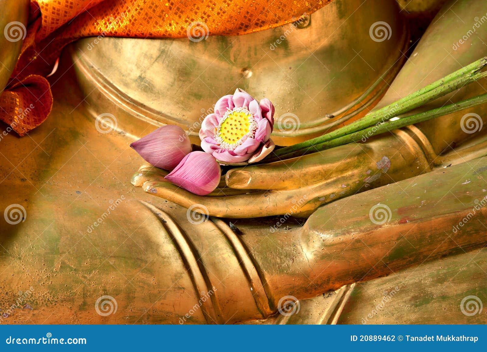 Lótus à disposicão de buddha