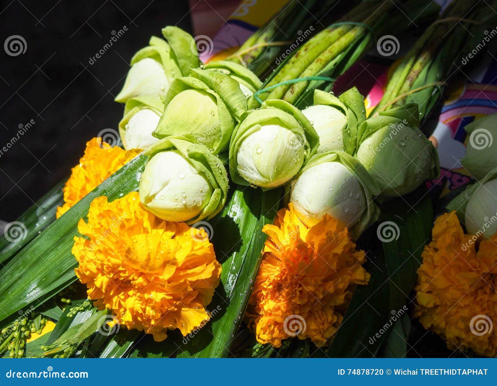 Lótus frescos com flor amarela