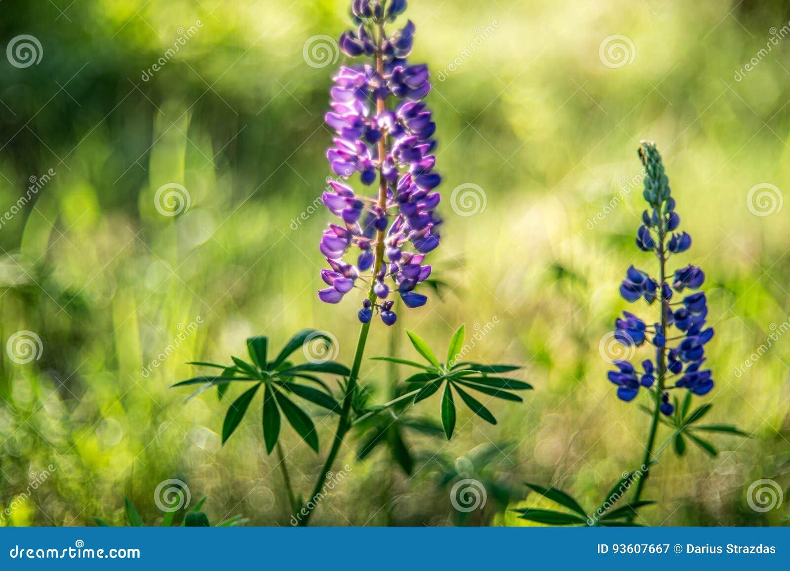 Lös blomma för sommar