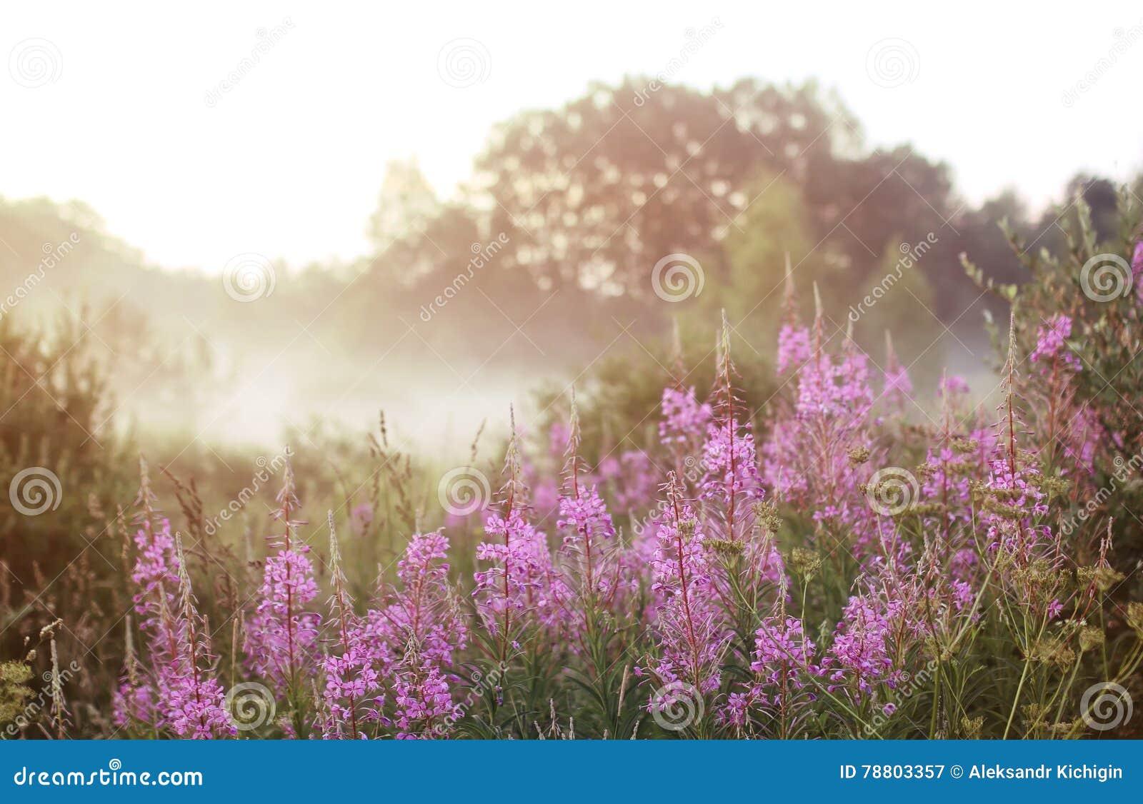 Lös blomma i dimma på solnedgång