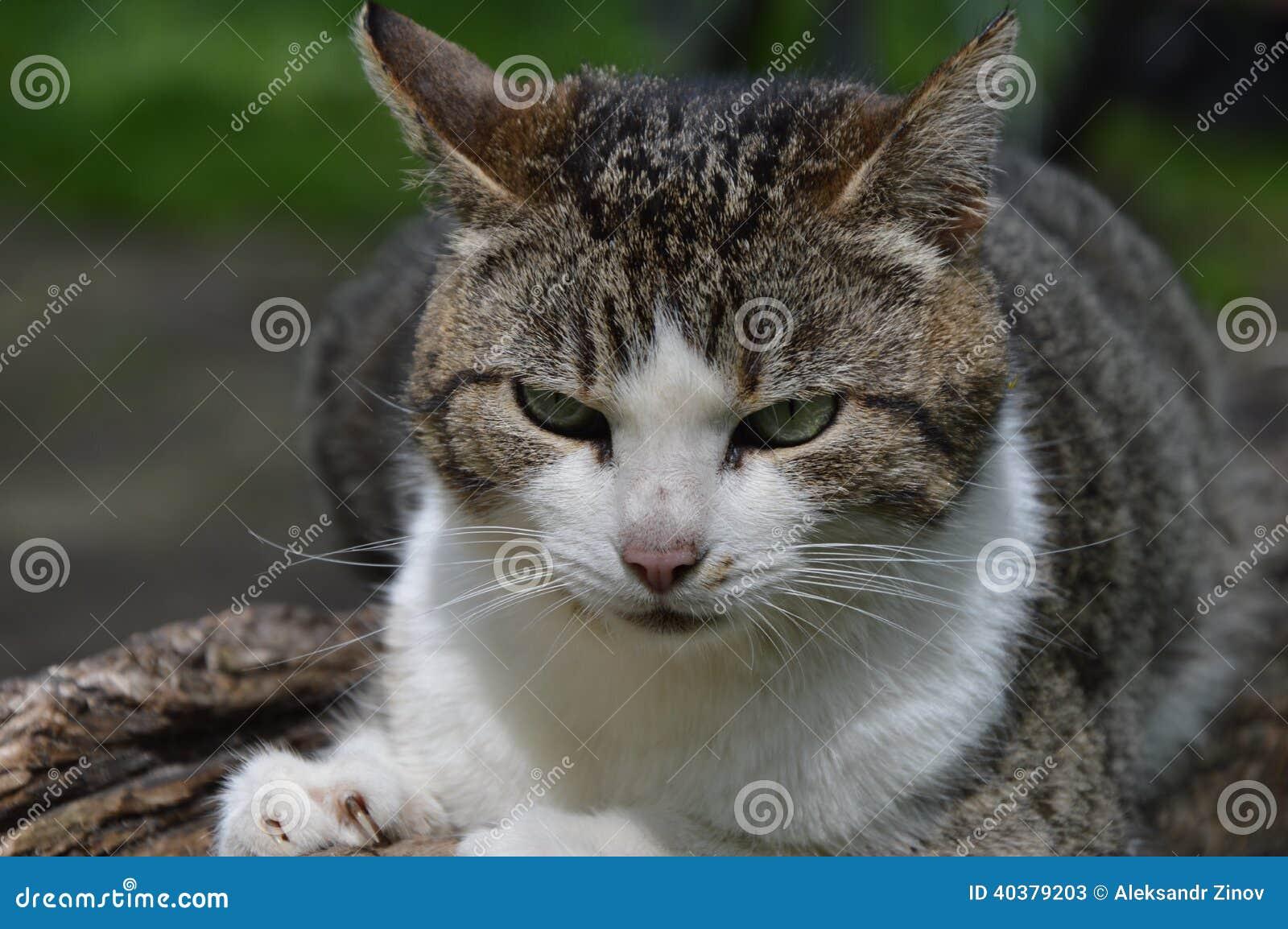 Lös katt