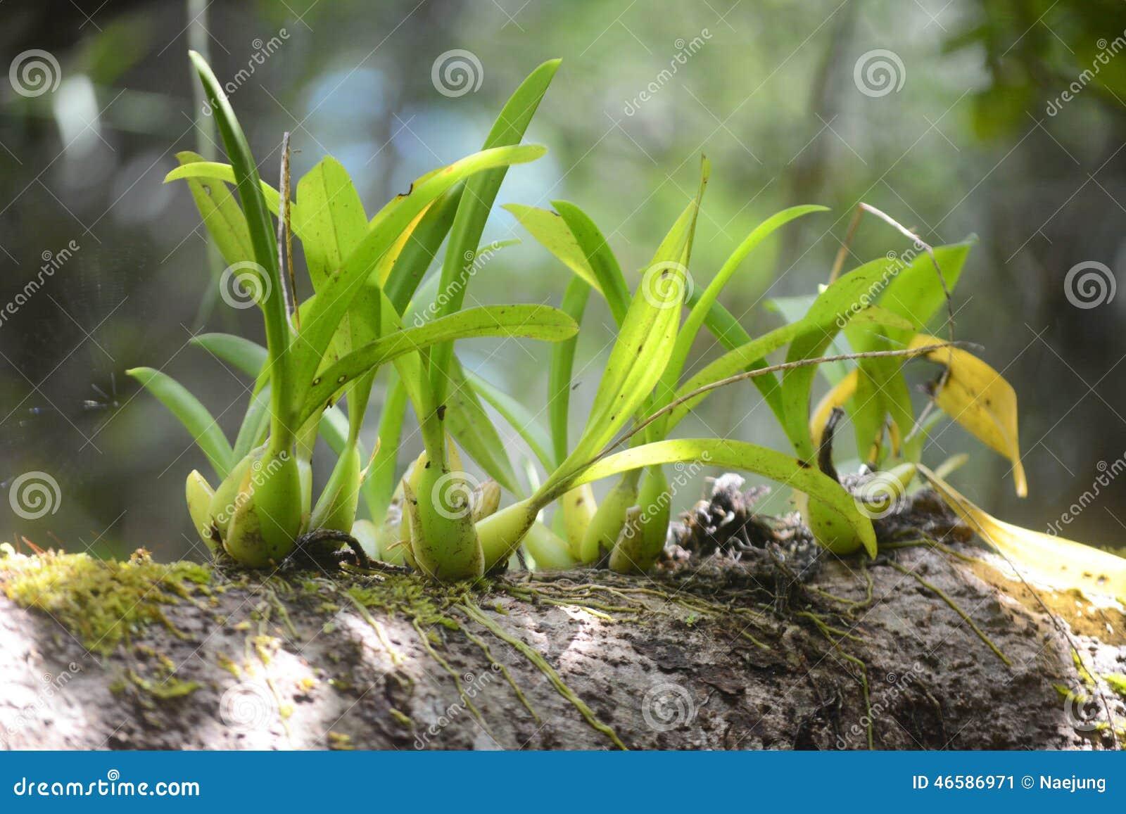 Lös orkidé på träd
