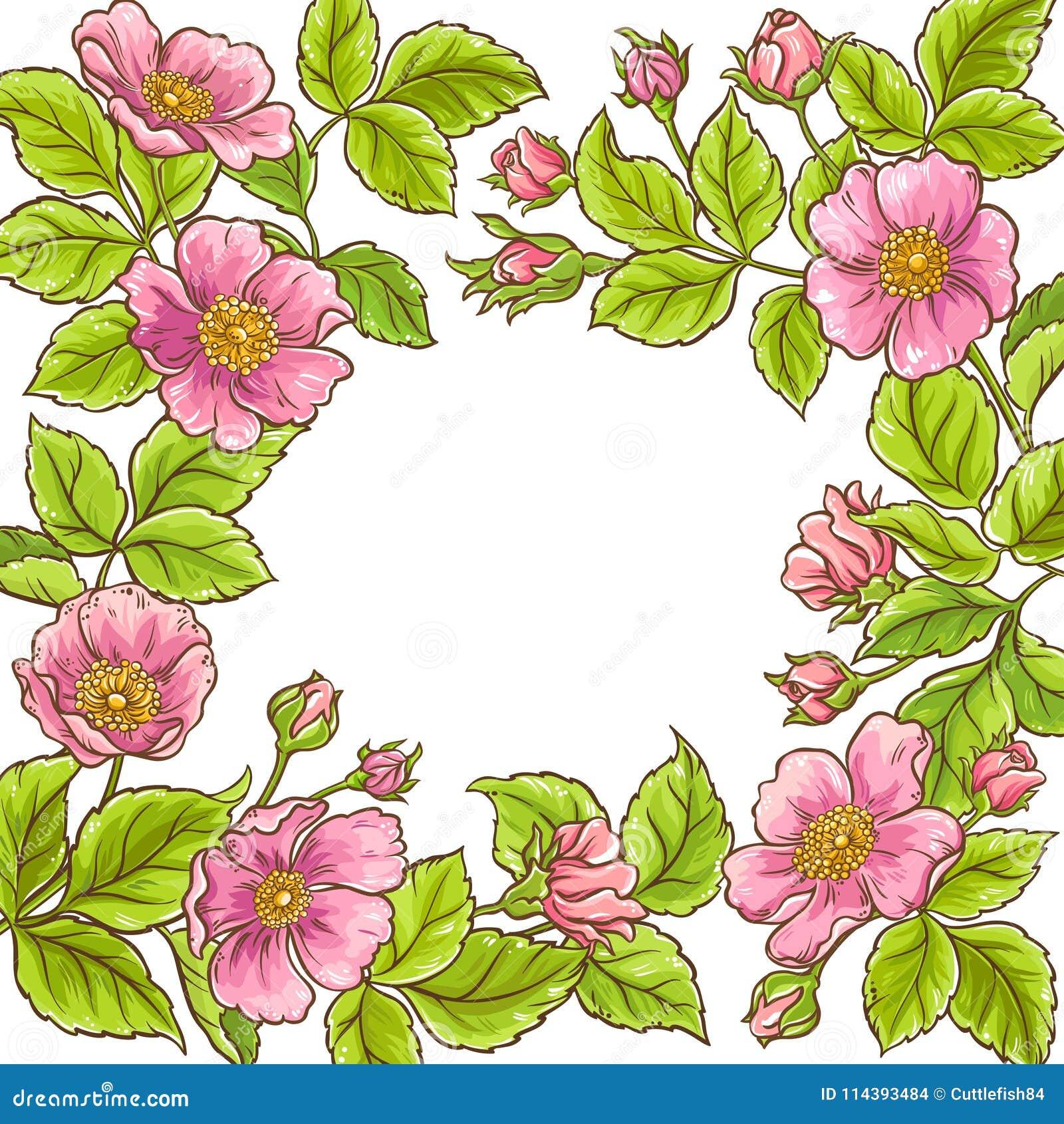 Lös rosa vektorram
