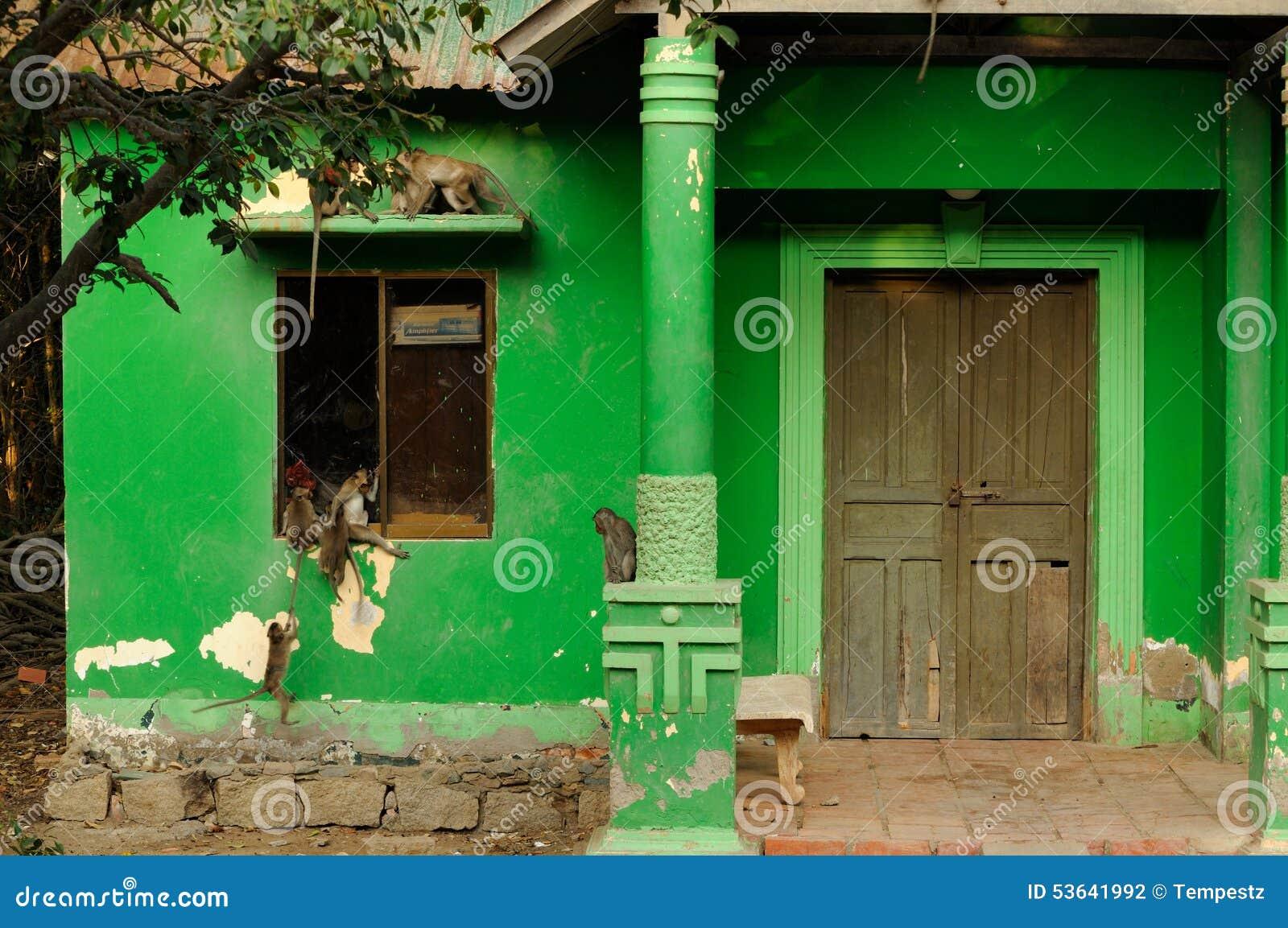 Lösa apor på ett grönt hus