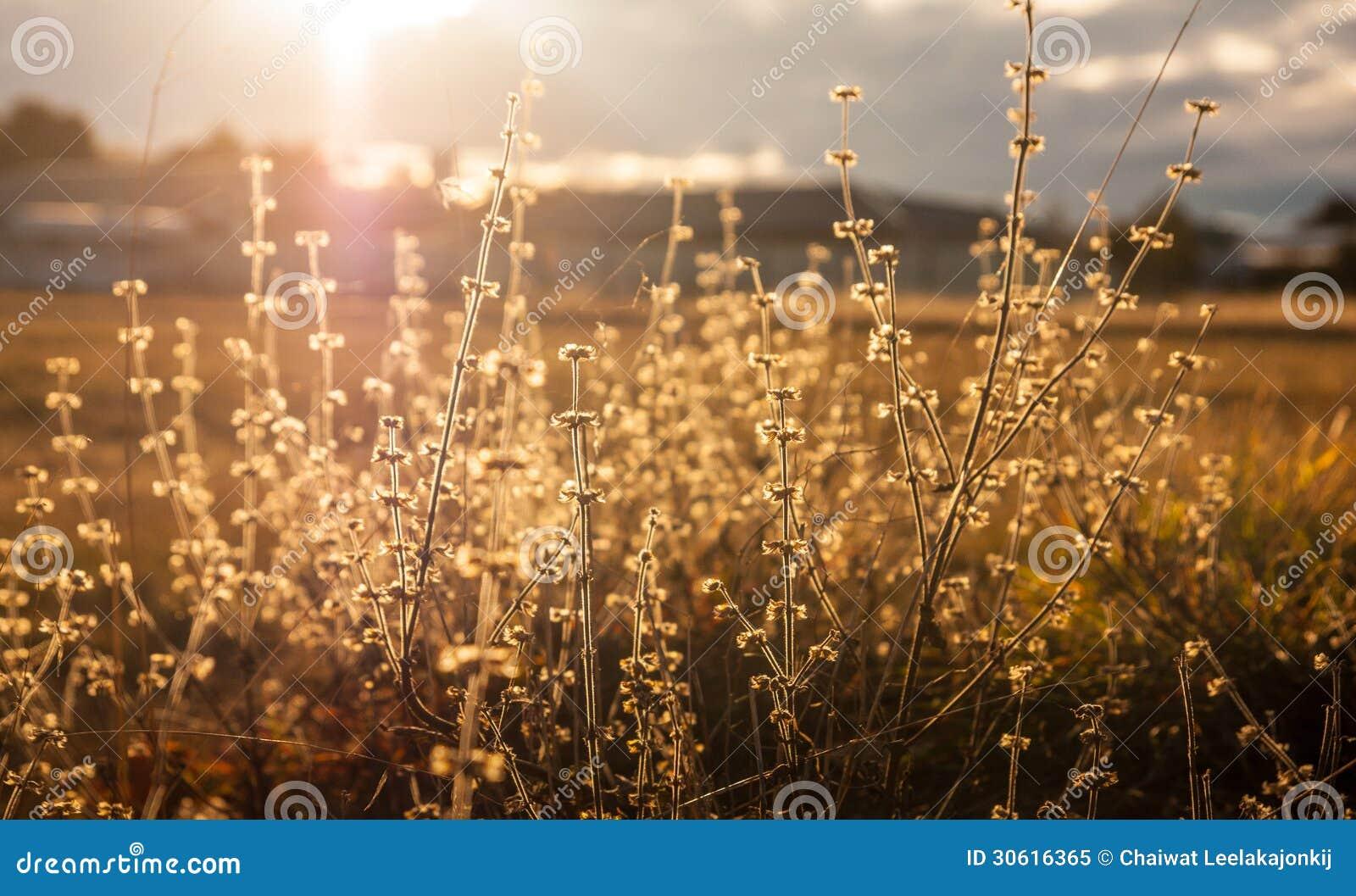 Lösa blommor i solnedgång