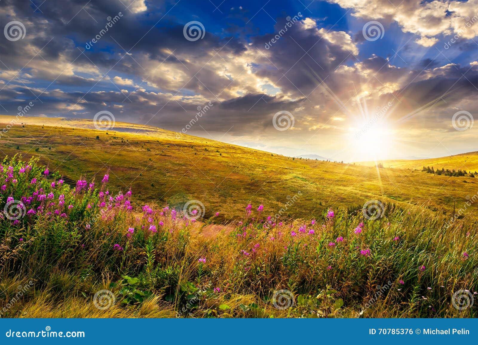 Lösa blommor på bergöverkanten på solnedgången
