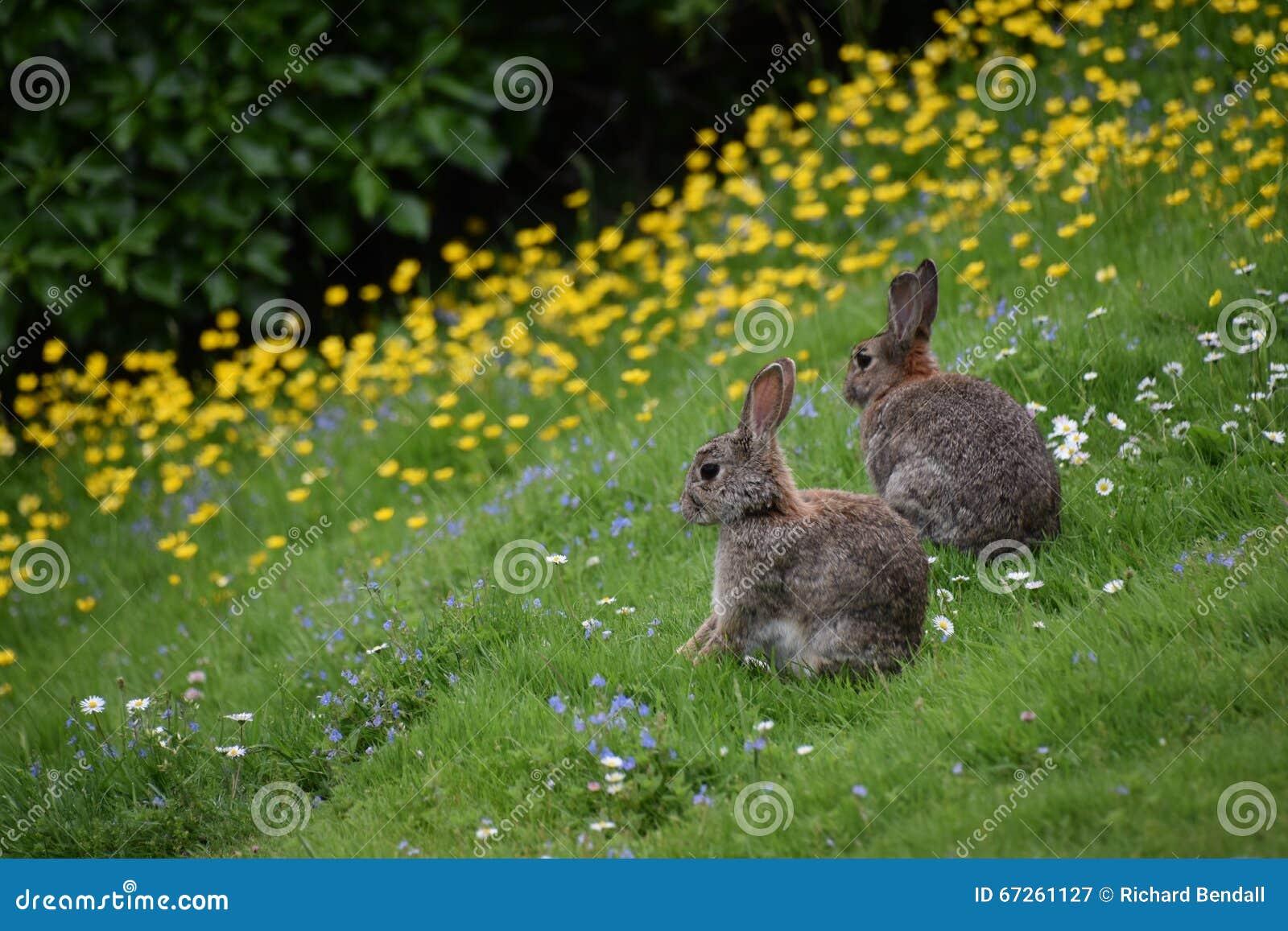 Lösa kaniner och blommor