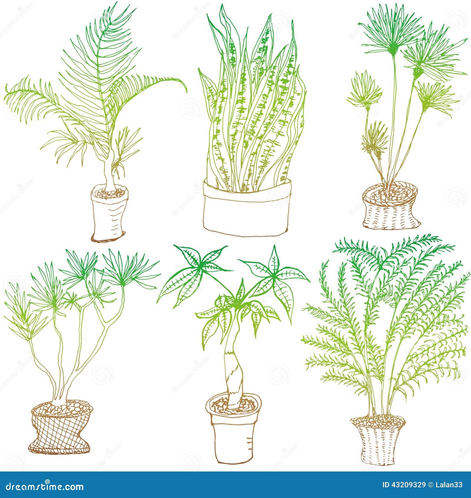 Download Lövverkväxt vektor illustrationer. Illustration av tecknat - 43209329