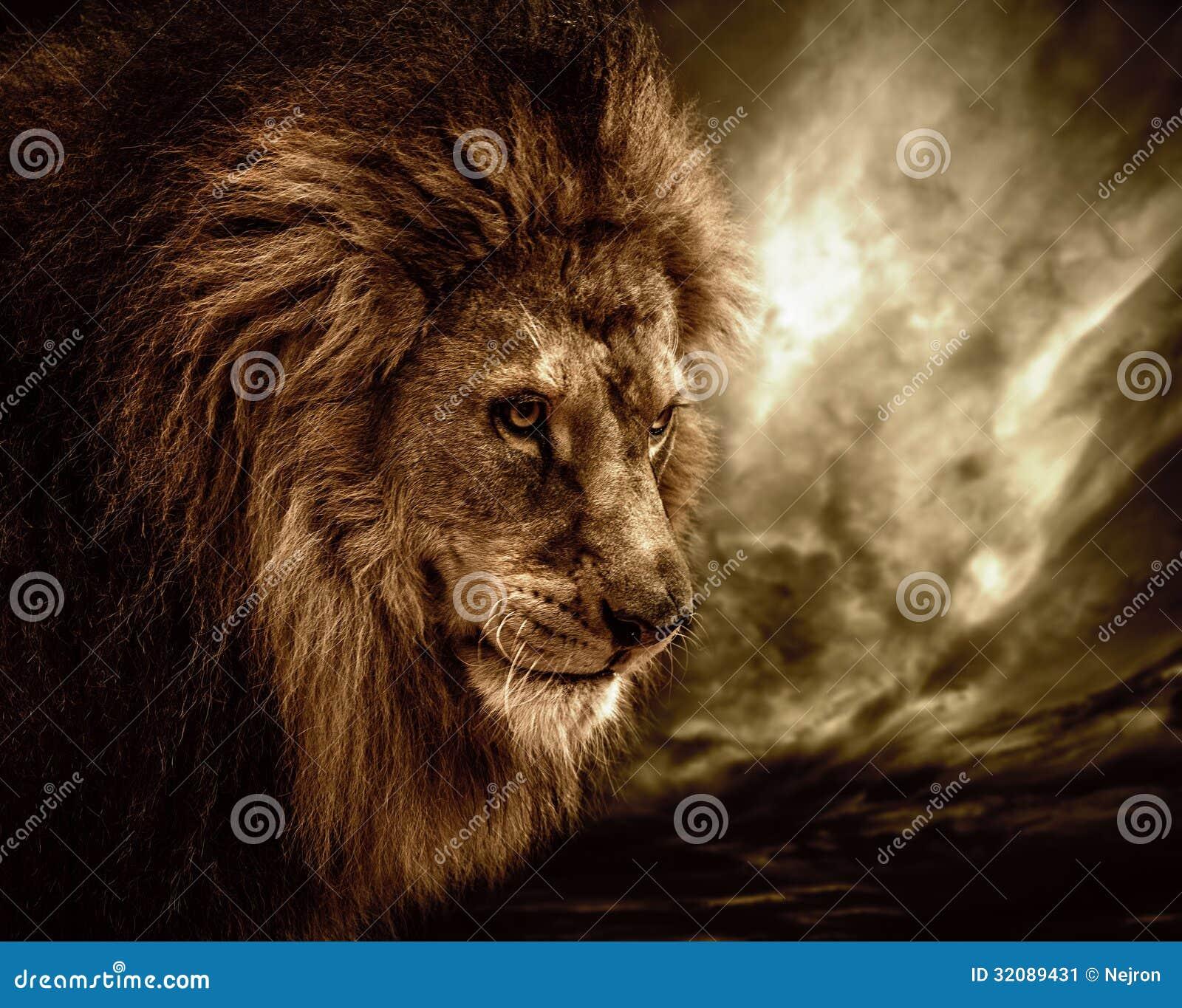 Löwe in den wild lebenden Tieren