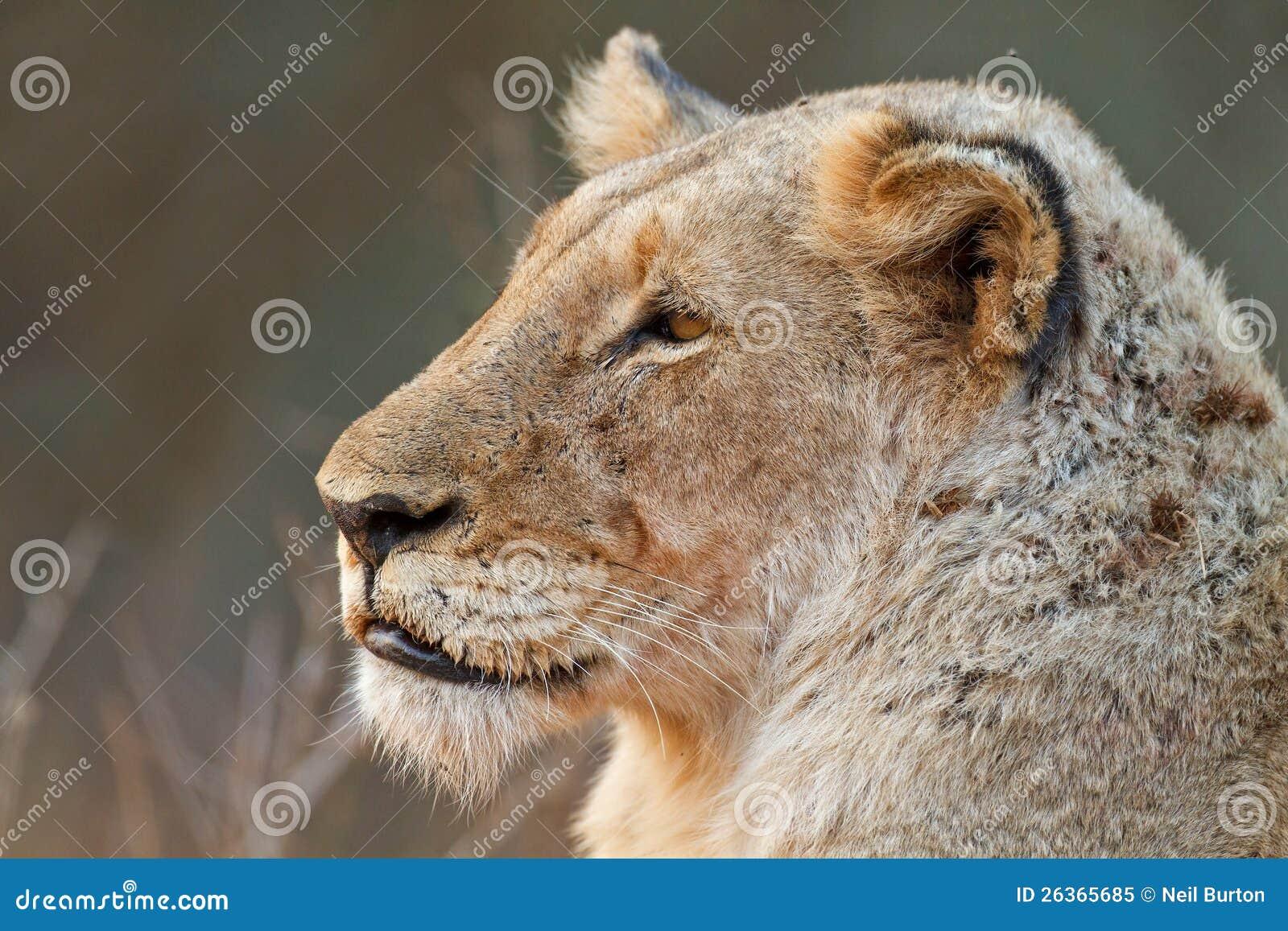 Löwinüberwachen