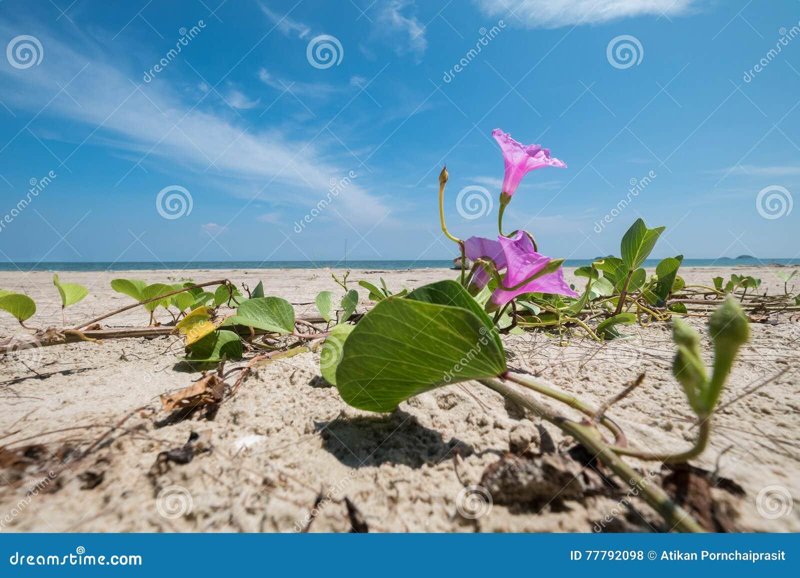 L élève de mail fleurit sur une plage avec la mer