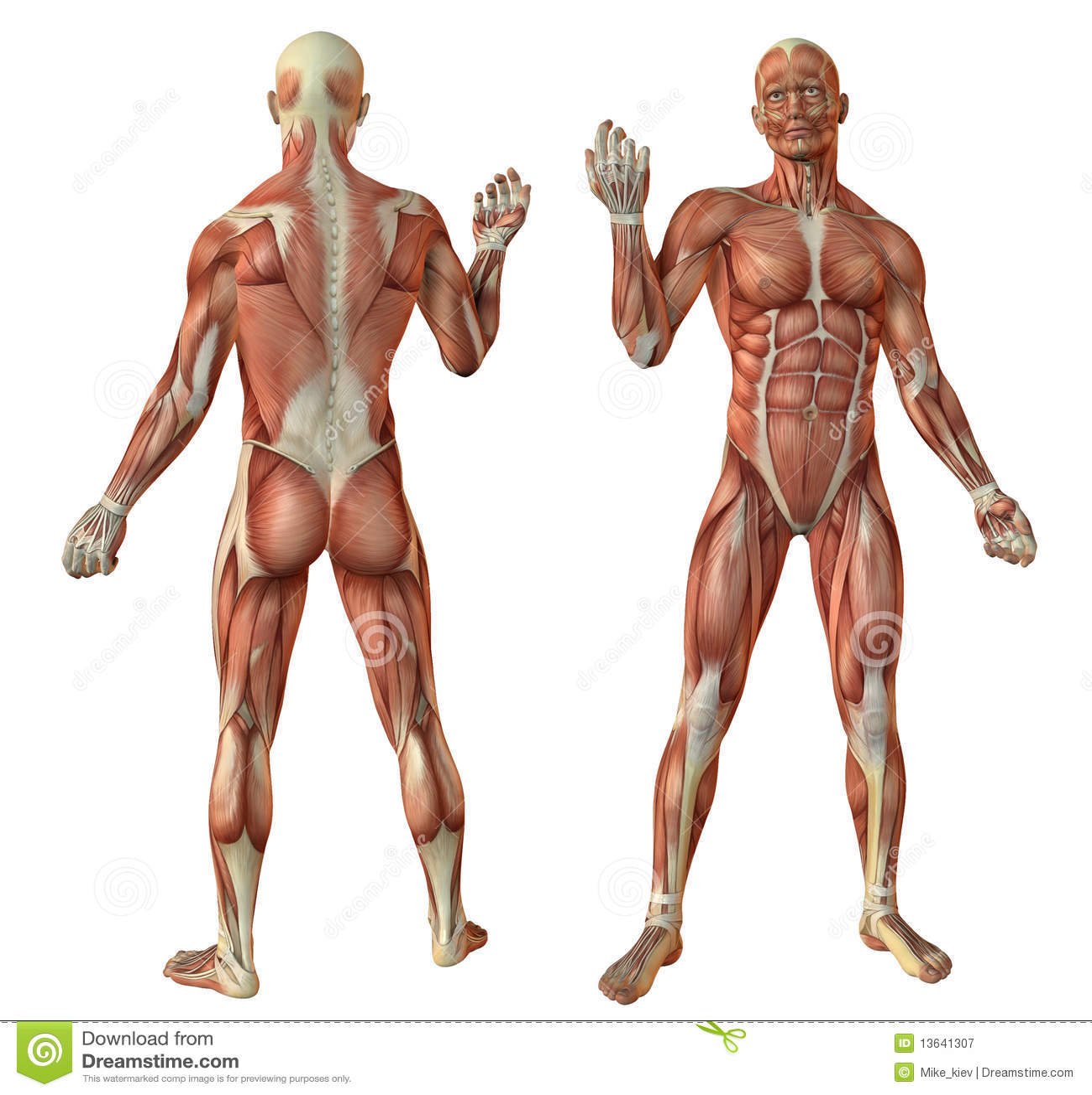 Neurologie: Homosexuelles Hirn - Spektrum der Wissenschaft