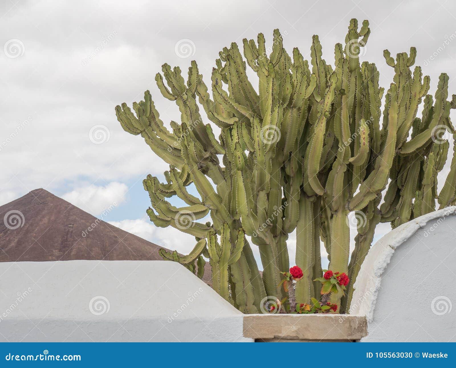 L île de Lanzarote