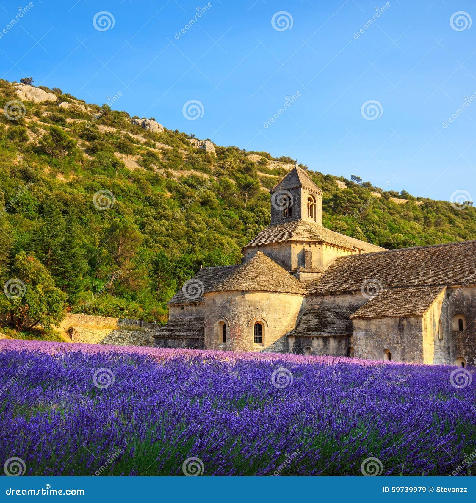 L 39 abbaye de la lavande de floraison de senanque fleurit sur le coucher du soleil gordes l photo - Floraison de la lavande ...