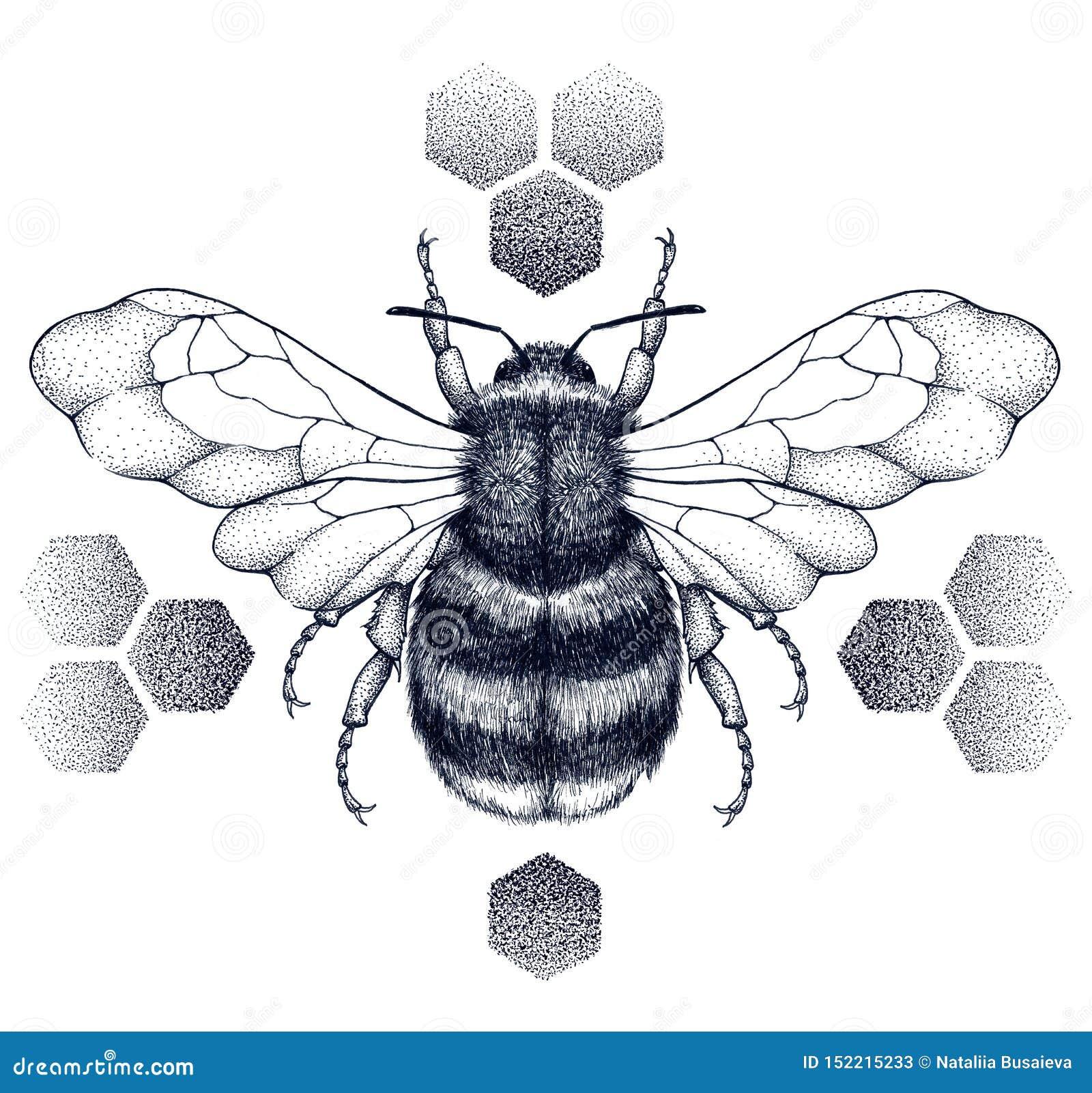L abeille barrée de miel se repose sur des nids d abeilles tatouage Illustartion de T-shirt