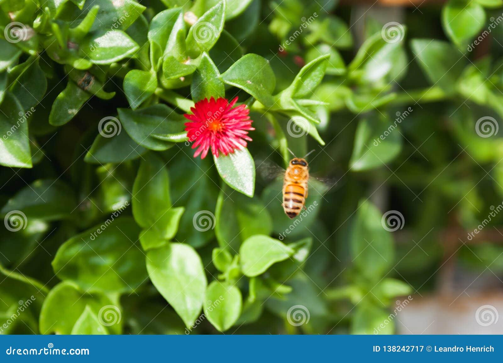 L abeille de miel
