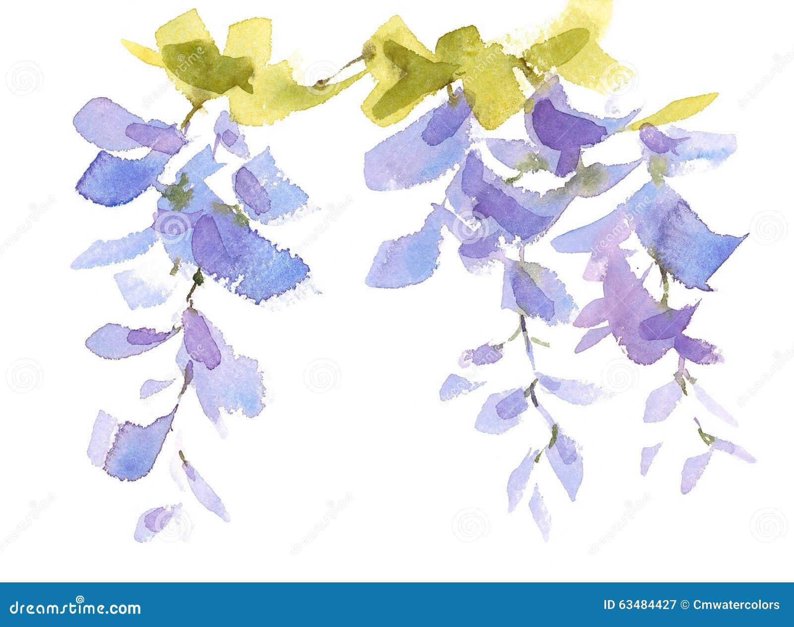 L 39 acquerello del ramo di glicine fiorisce l 39 illustrazione for Glicine disegno