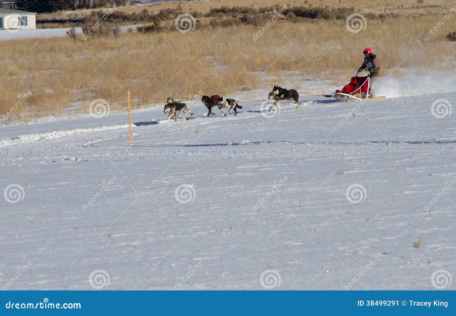 L action a tiré d un musher et d une équipe féminins