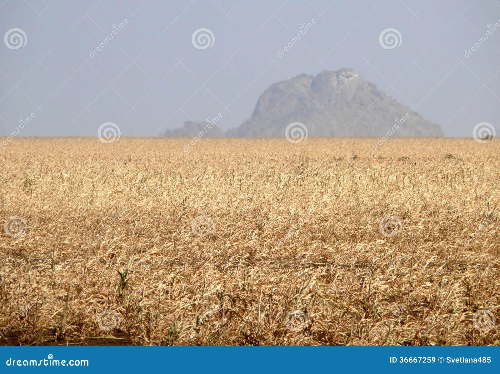 L 39 afrique sud ouest soudan montagnes nature de paysage for Agence paysage de l ouest