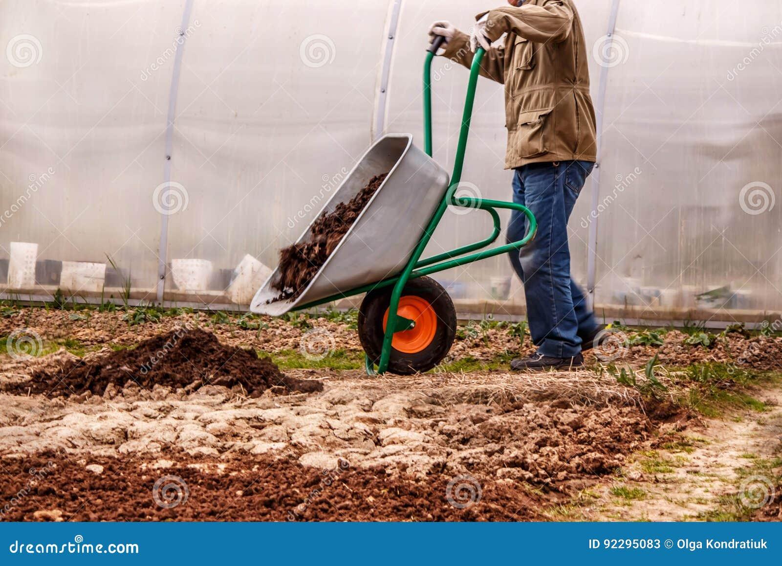 L agriculteur masculin met dans l engrais moulu d engrais