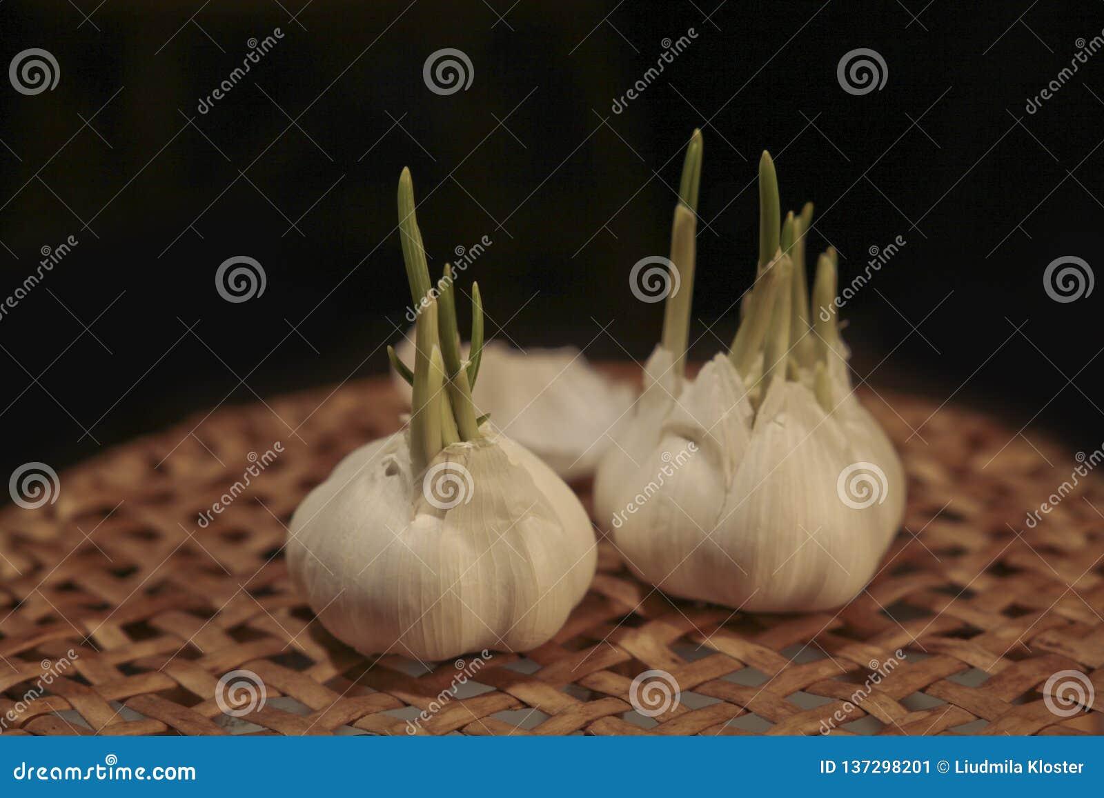 L ail et le sel sont d excellents assaisonnements pour des plats