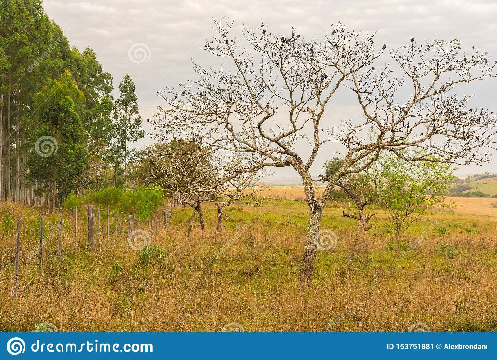 L albero con i suoi frutti scuri jpg
