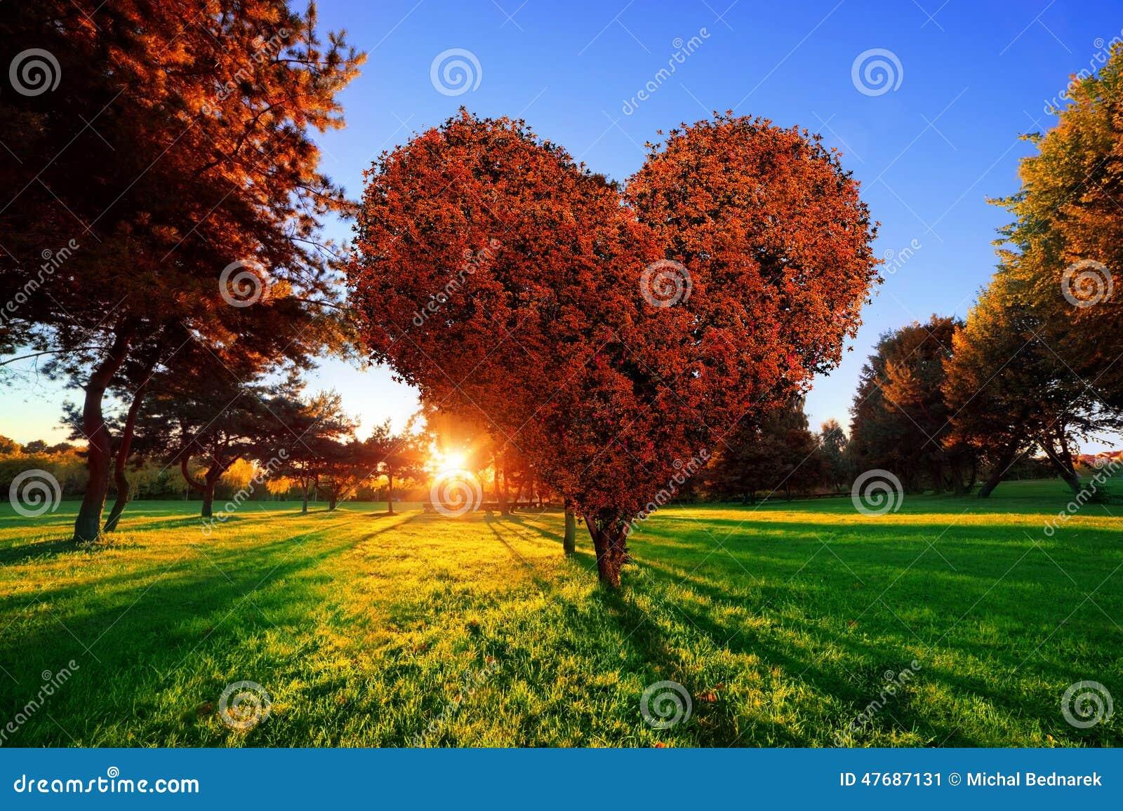L albero di forma del cuore con rosso lascia in parco Simbolo di amore