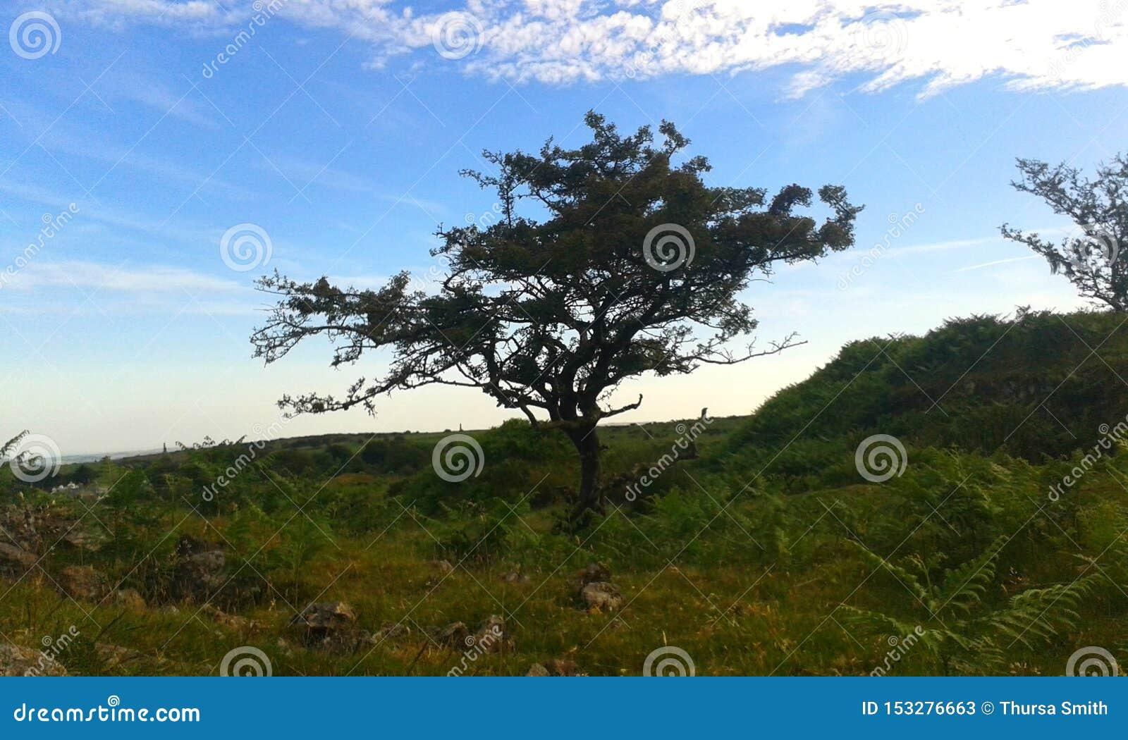 L albero esposto al vento, Bodmin attracca, l Inghilterra