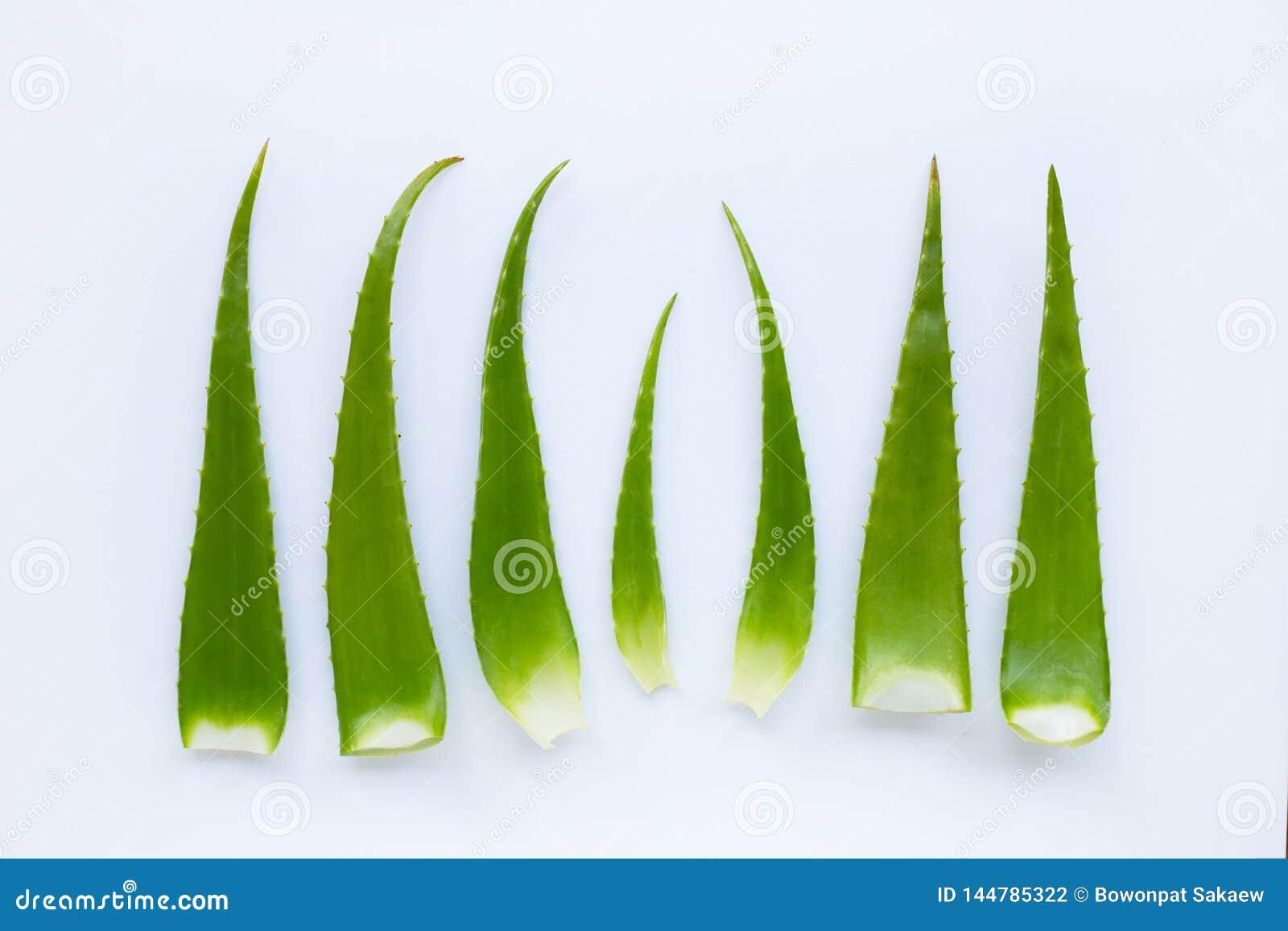 L aloès Vera est une plante médicinale populaire pour la santé et la beauté, dessus au-dessus de blanc