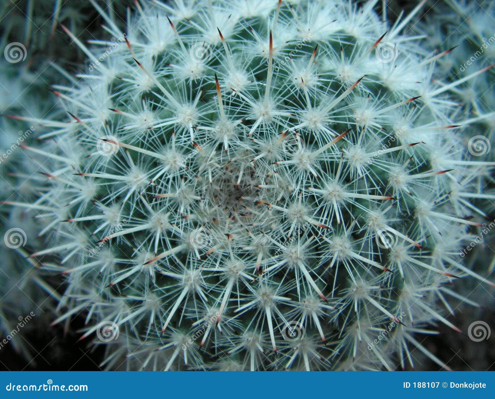 L altro fronte del cactus