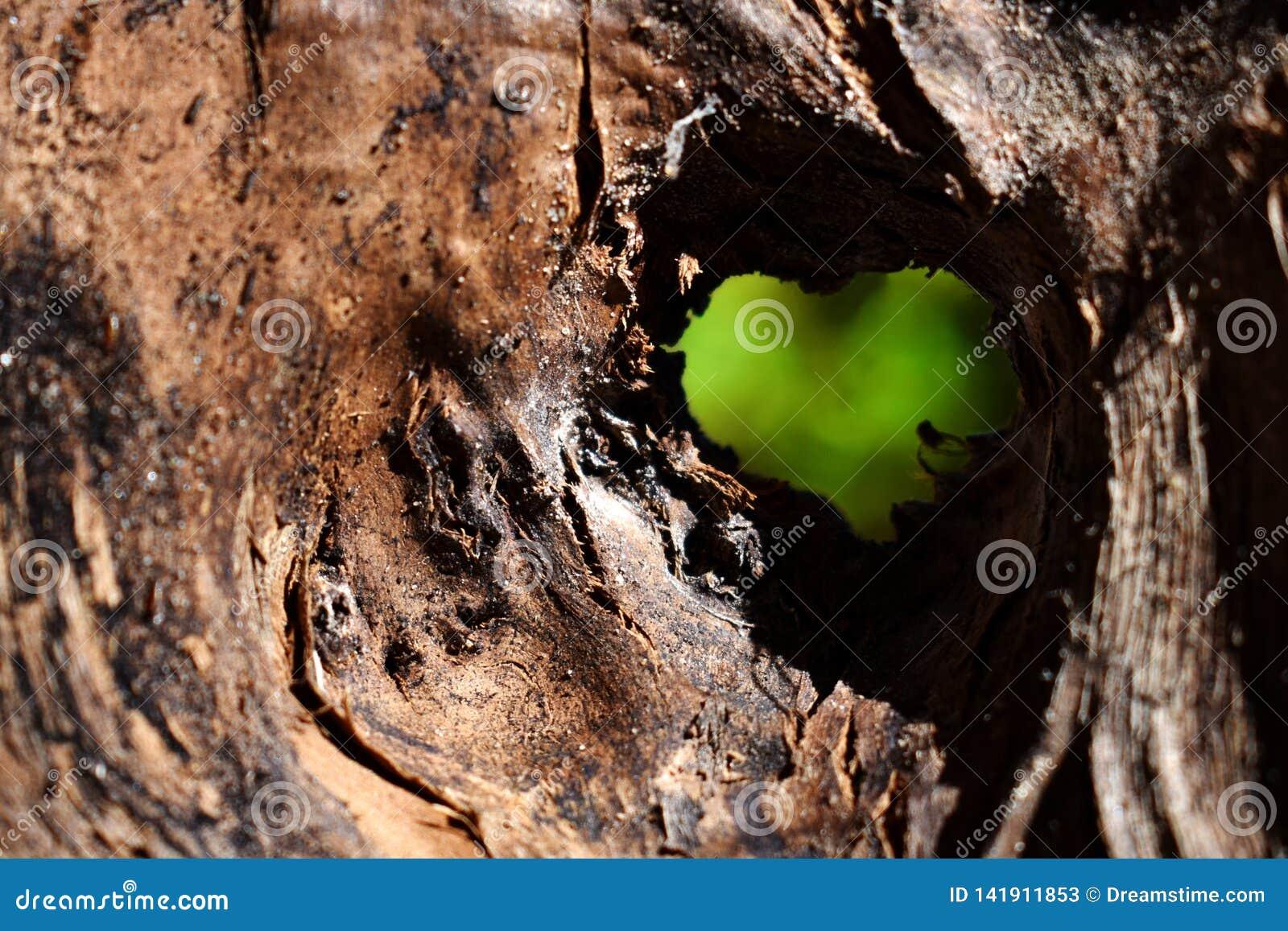 L amour est tout autour de nous