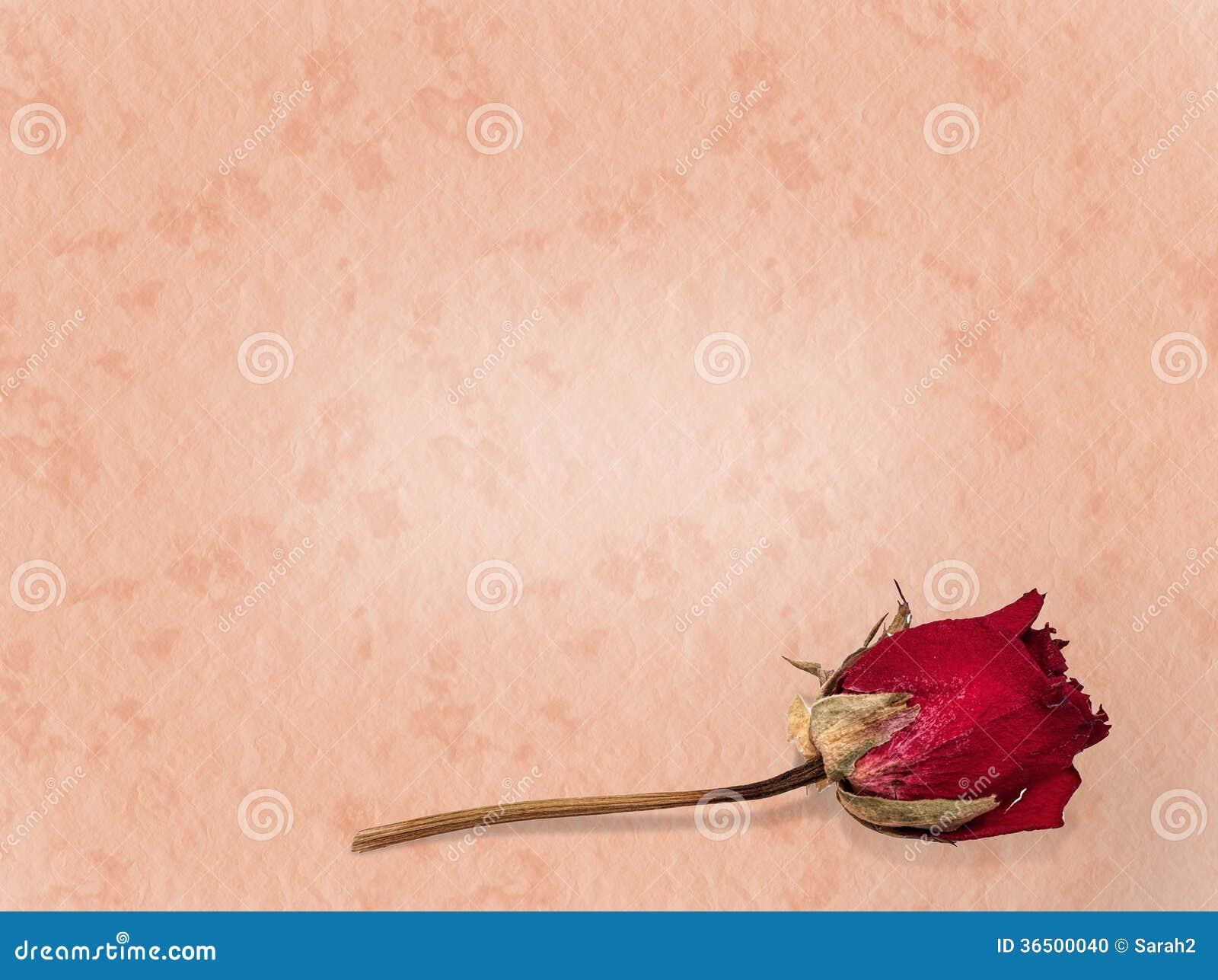 L amour a perdu le fond rose fané