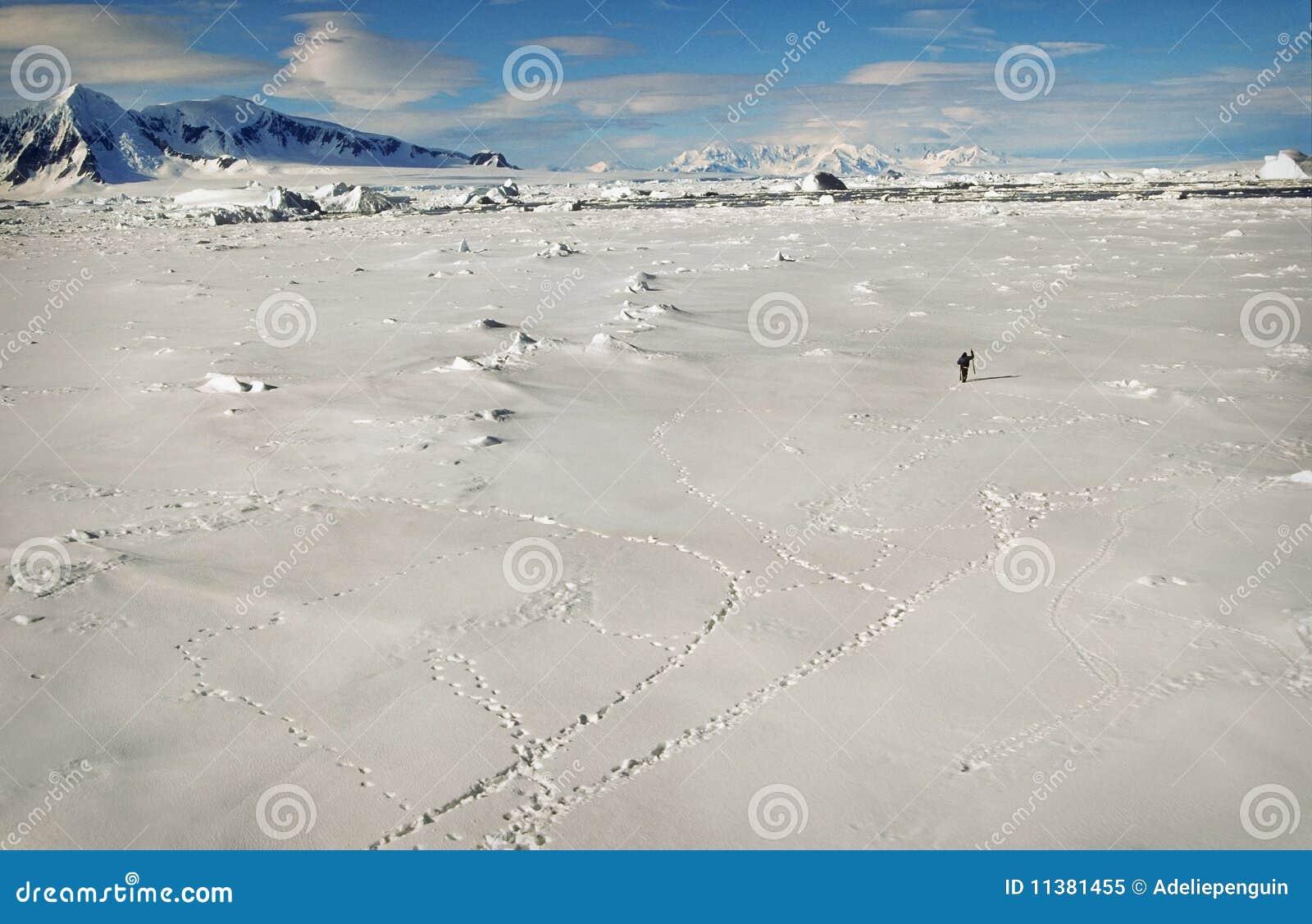 L Antarctique, horizontal de neige et de glace