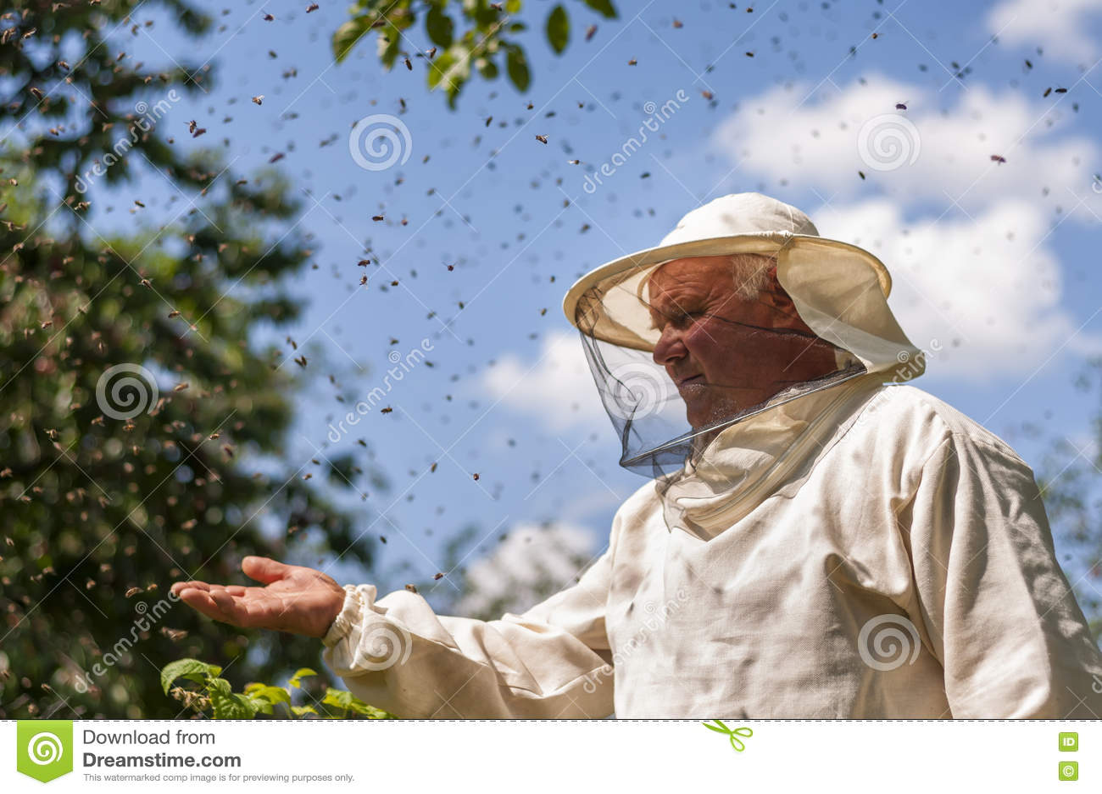 L apicoltore e l ape sciamano, miele dell alveare dell arnia