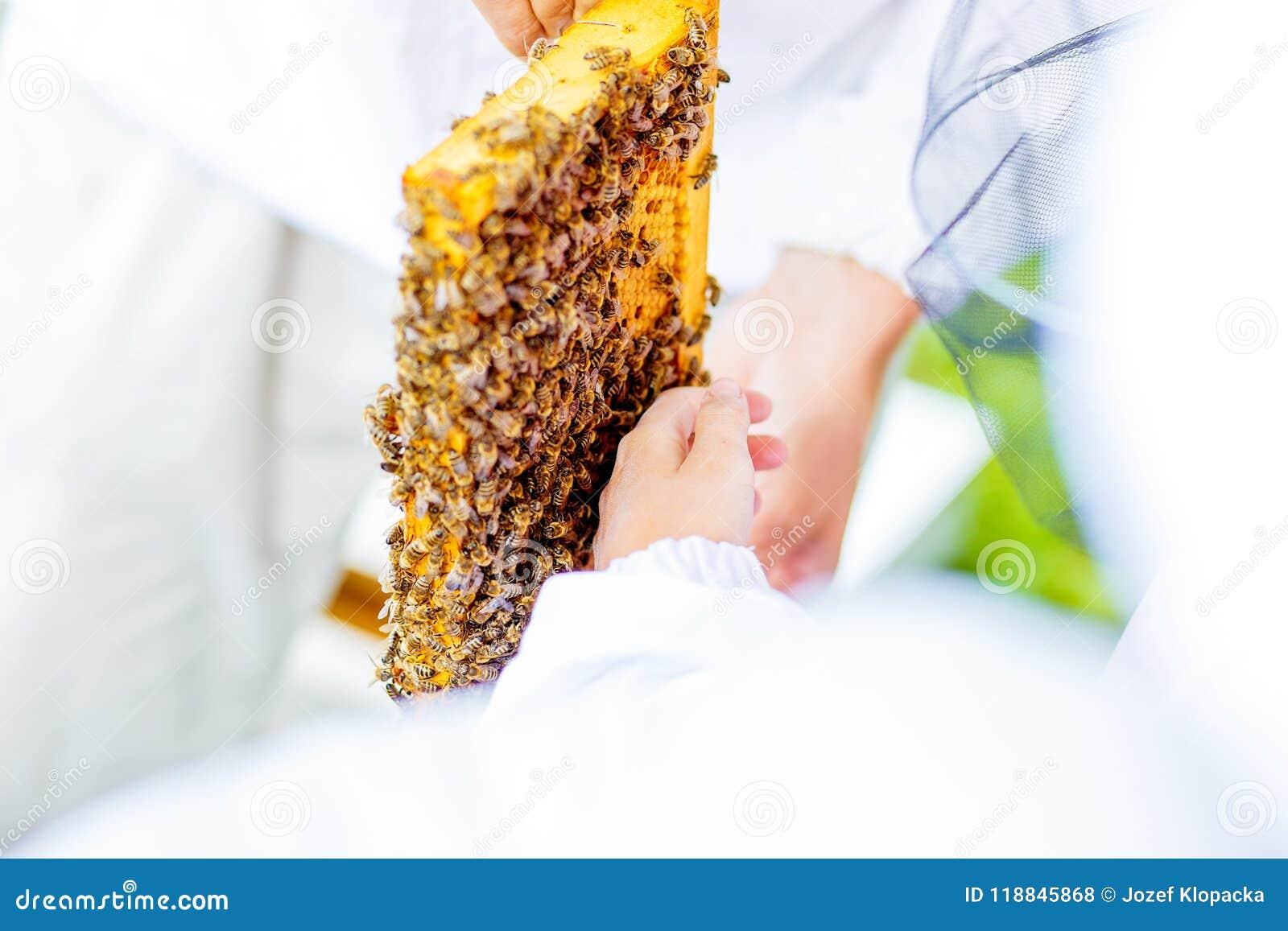 L apiculteur donne aux enfants une occasion de toucher et examiner le nid d abeilles