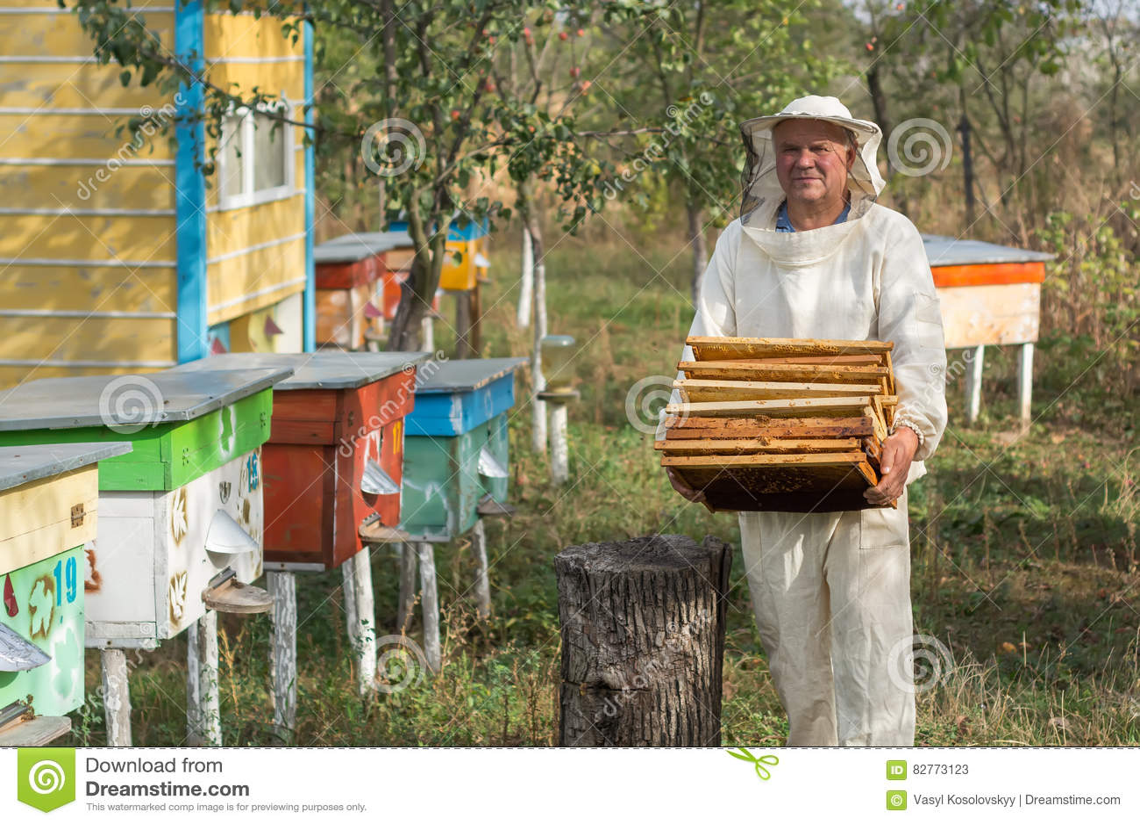 L apiculteur travaille avec des abeilles et des ruches sur le rucher