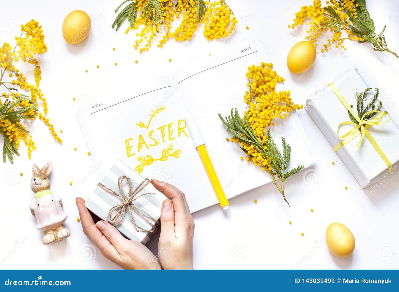 L appartement de ressort de Pâques s étendent avec des fleurs de mimosa, un carnet et un lapin La main de la femme holiding un ca