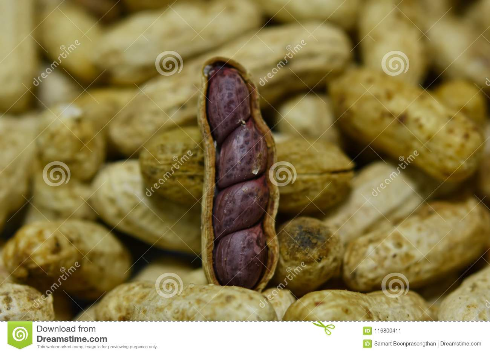 L arachide bollita