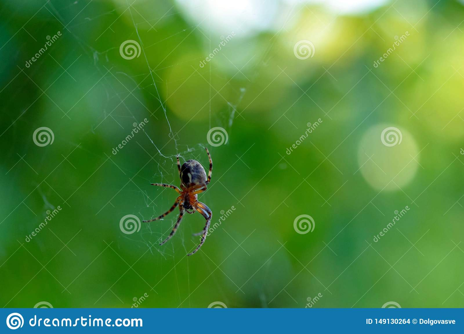 L araign?e sur le Web