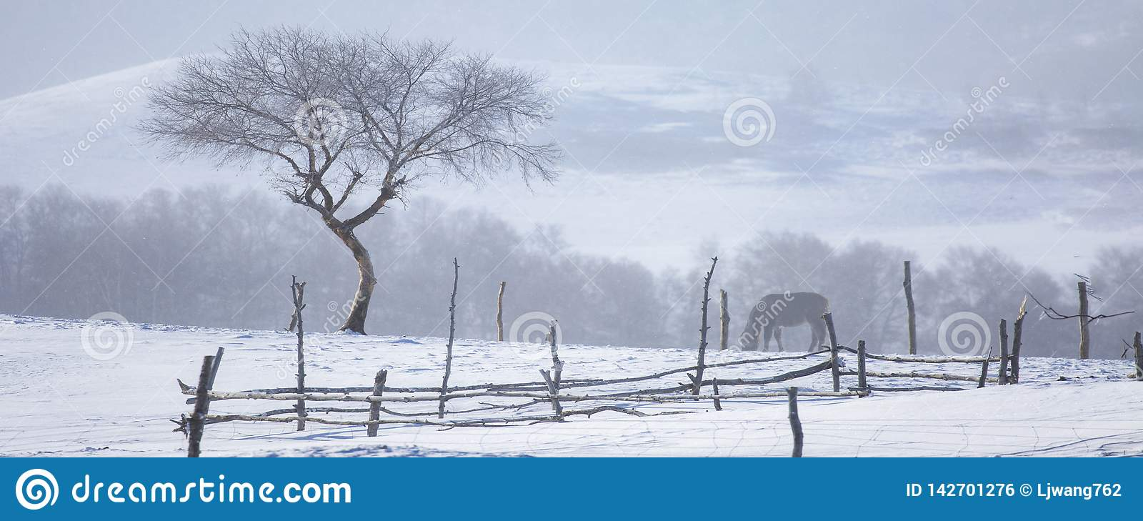 L arbre dans la neige