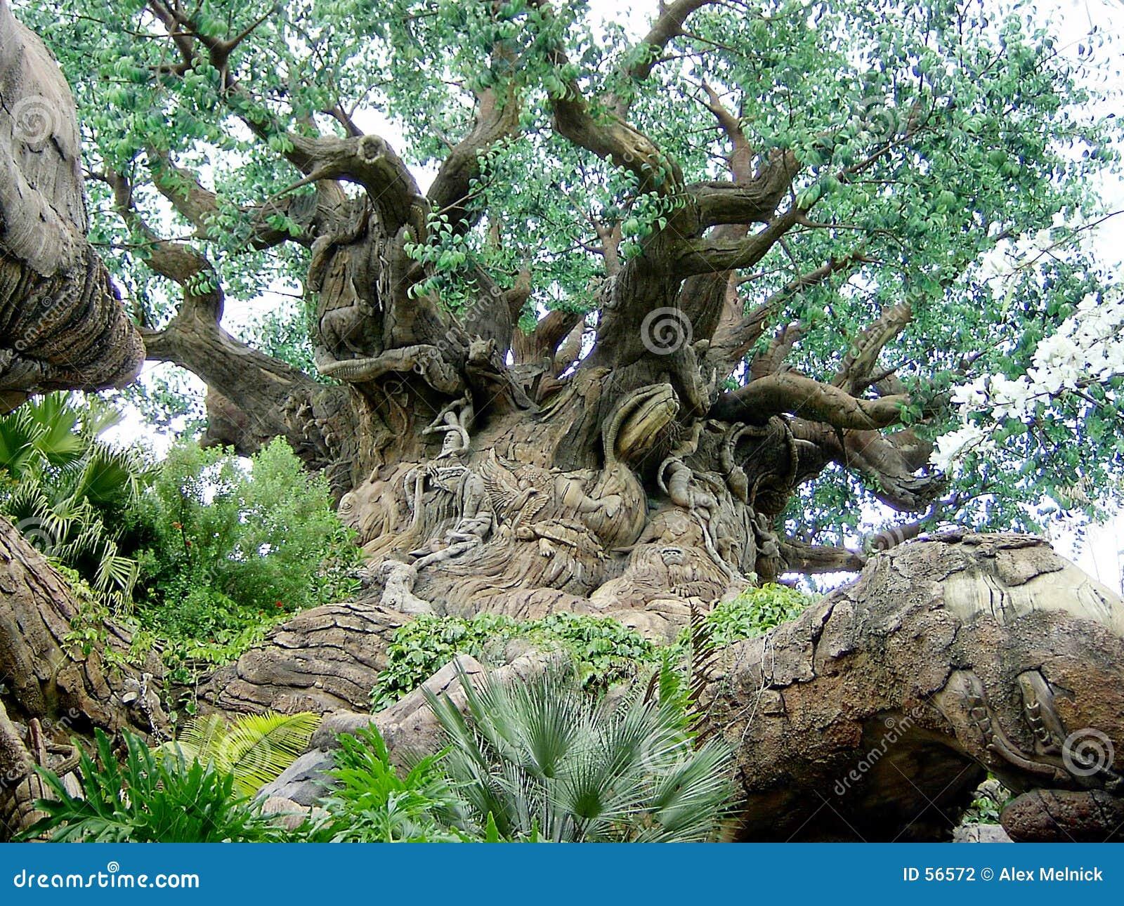 L arbre grand