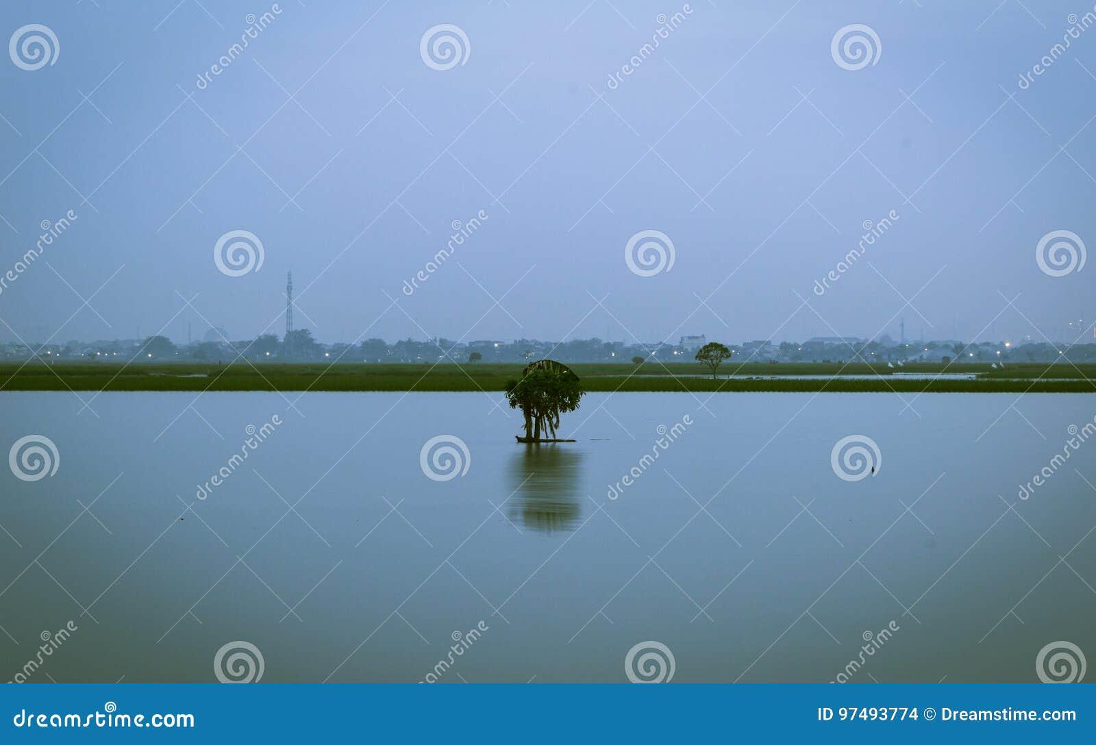 L arbre isolé