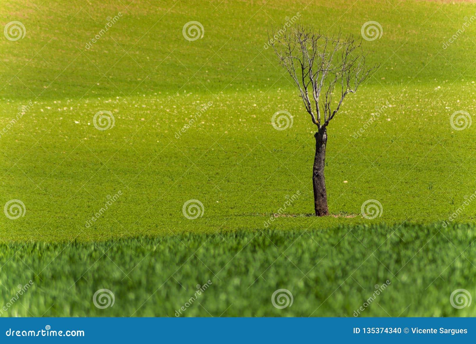L arbre mort isolé en vert