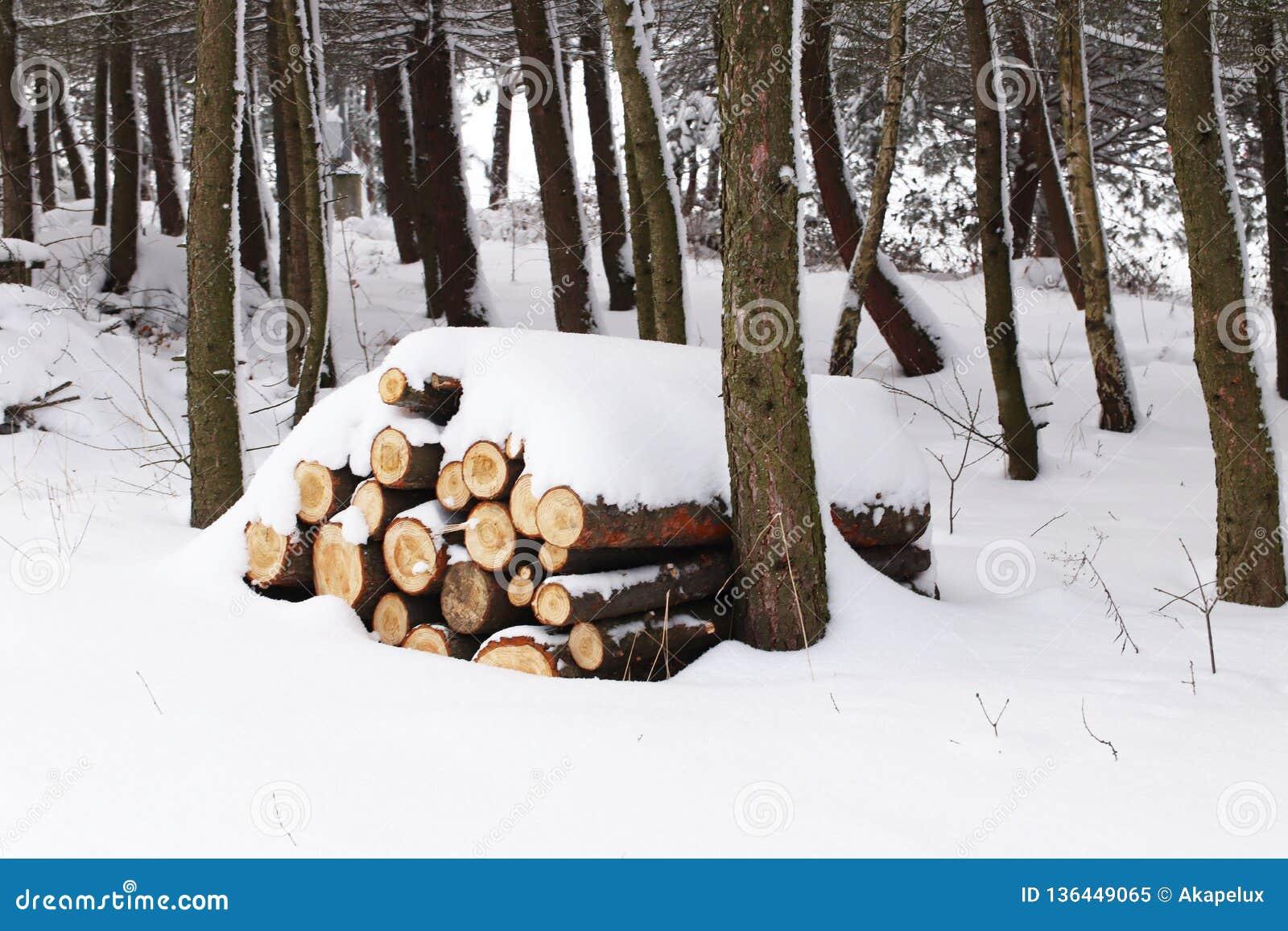 L arbre scié est coupé en rondins et plié dans une pyramide arrosée avec la neige Moisson d hiver du bois en mer froide de forêt
