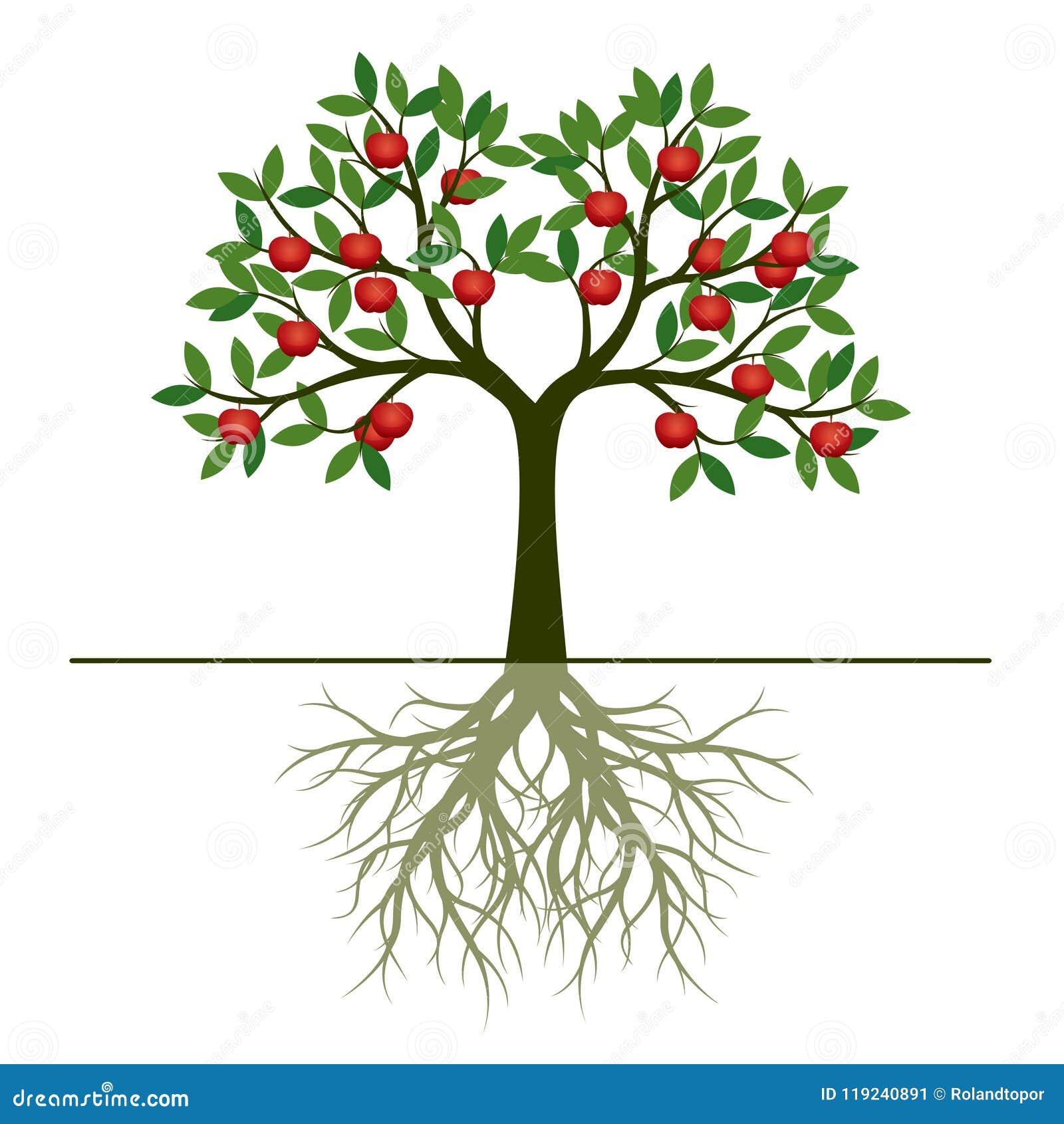 l 39 arbre vert de ressort avec la pomme de racine et de rouge porte des fruits illustr de vecteur. Black Bedroom Furniture Sets. Home Design Ideas