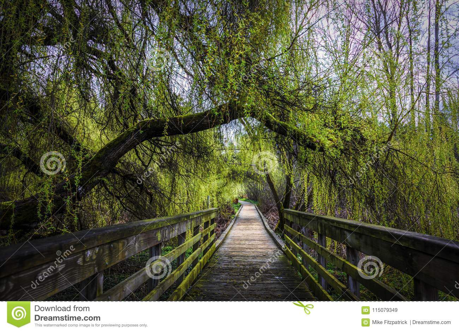 L arbre vert luxuriant a couvert la promenade