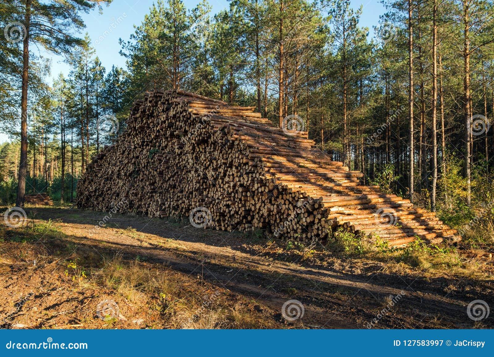 L area di disboscamento illegale di vegetazione nella foresta ha tagliato la t