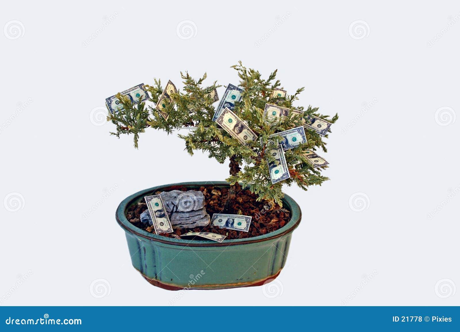 L argent se développe sur des arbres ?