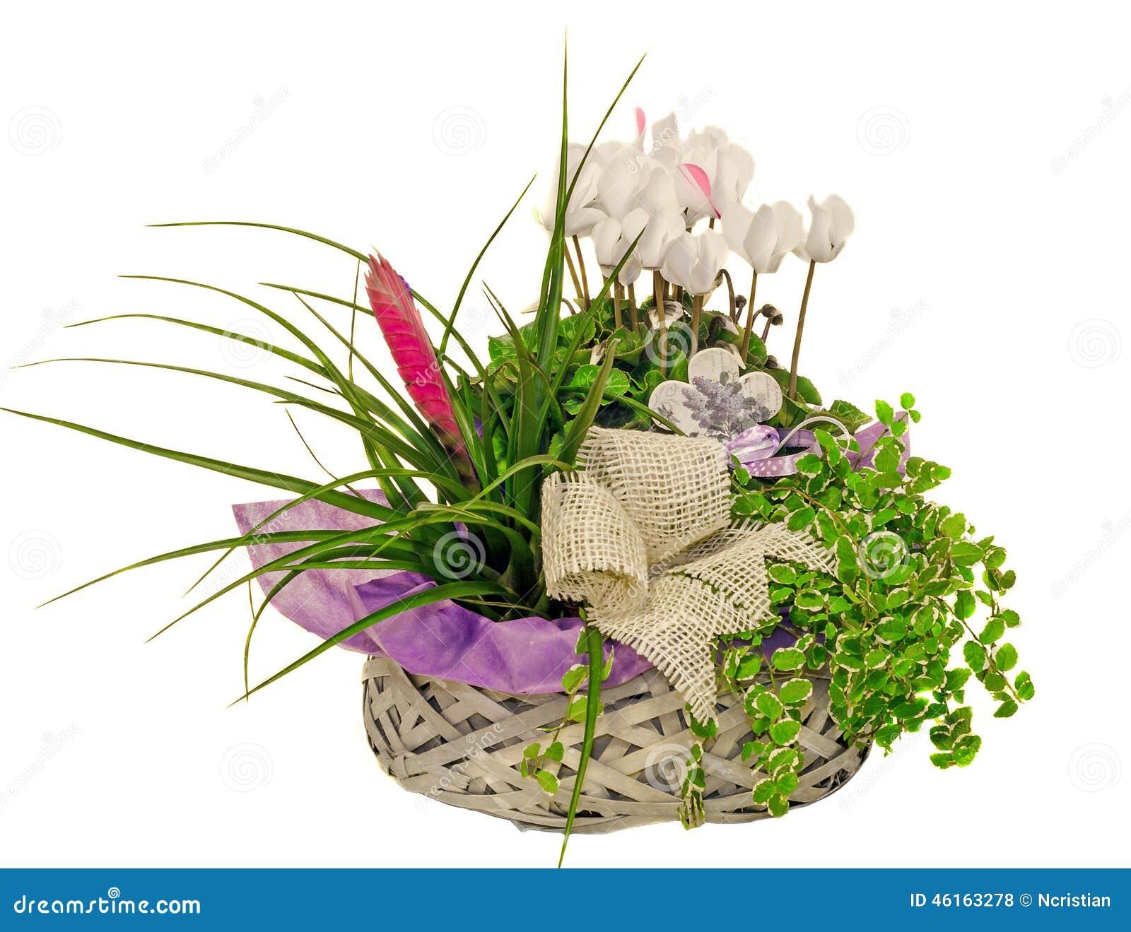 L 39 arrangement floral avec des fleurs de cyclamen et le tillandsia cyanea fleurissent dans un for Arrangement floral artificiel