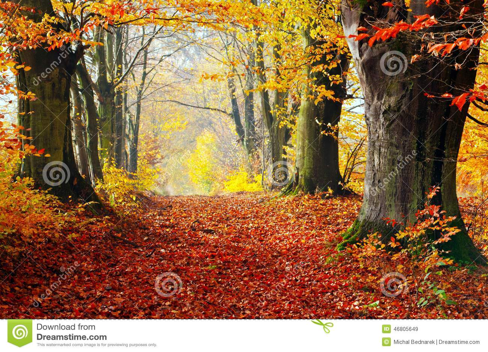 L autunno, sentiero nel bosco di caduta di rosso va verso luce